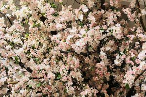Monsoon-kids-bespoke-Westfield-cherryblossom-floral-prop-prop manufacture-visualmerchandising-production-fake tree-instore