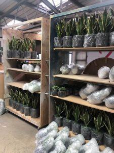 plants greenery fashion bespoke logos pro prop manufacture visual merchandising production window display retail